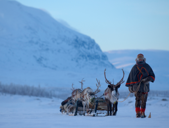 A Swedish herdsman at work with his trusted reindeer.