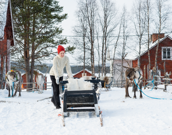 Reindeer sledding in Finland is a trusted mode of transport.