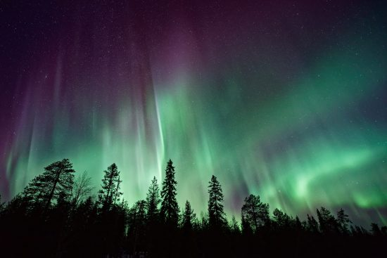 Silhouette the forest by Northern Light