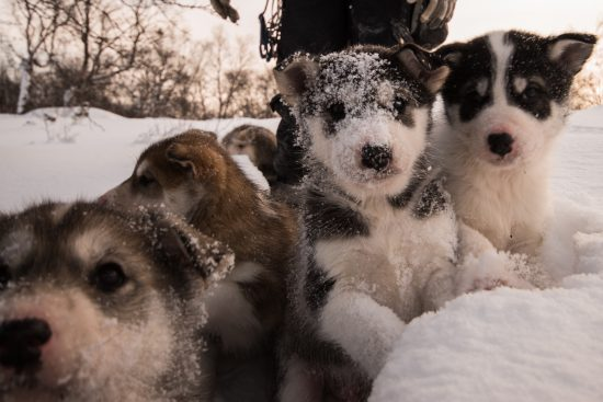 Snowhotel Puppies just love lots of hugs!