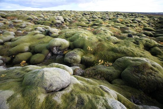 Out of this world landscape at the Lava field in Iceland
